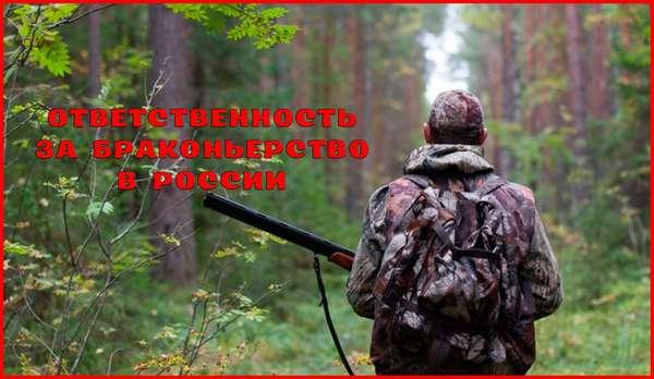 Наказание за браконьерство в России