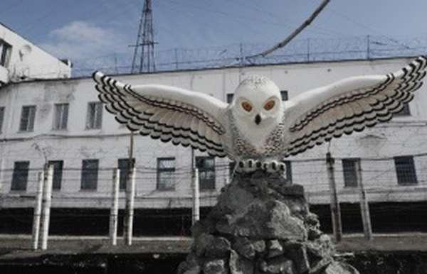 Колония Полярная сова