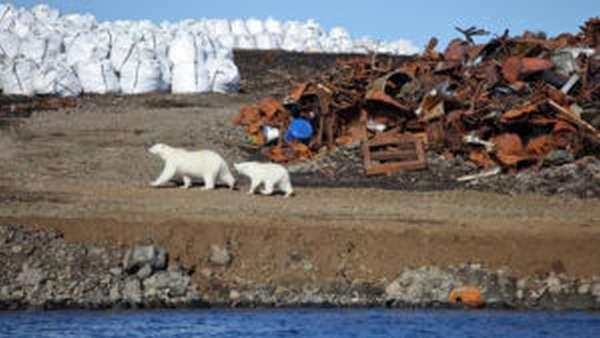 О чем говорит статистика нарушений в сфере природоохраны?