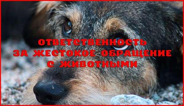 Уголовная ответственность за жестокое обращение с животными
